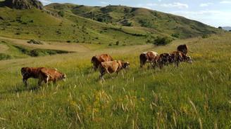 Kırmızı et üretiminde büyüme stratejisi