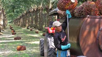 Palm yağında düşen stok, fiyat artışını tetikleyebilir!