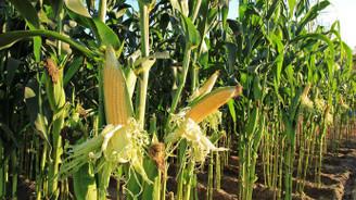 Yılda bin çiftçiyi eğiterek yüzde 12 verim artıracak