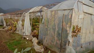 Muğla'da şiddetli fırtına seralara zarar verdi