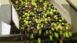 Avrupa'da Türk zeytinyağı tartışması