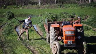 Tarımda ücret artışı enflasyonun altında