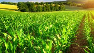 İzmir'de tarım OSB'lere talep, toplam alanı aştı