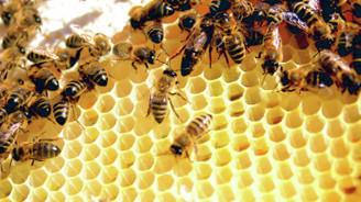 Arılar 3 ayda 6 milyon dolar getirdi