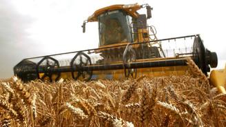 Yabancı tohumların yerini yerli tohumlar alacak