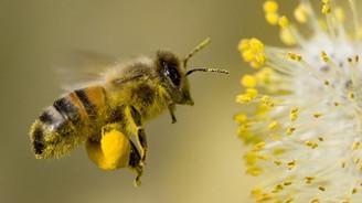 Arı ölümlerinin önüne geçebiliriz