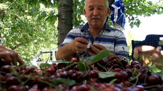 Bursa'da erkenci kirazın hasadına başlandı