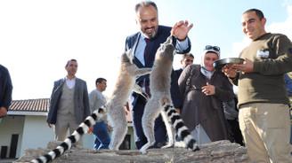 Bursa Zoo 20 yaşında