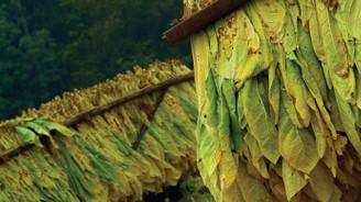 Tütünde 5 yıllık ticaret hacmi 5,2 milyar dolar oldu