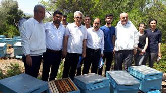 Bal üreticilerine 11 bin ana arı dağıtılacak