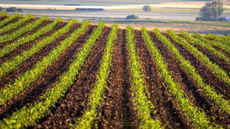 İBB'den çiftçiye destek projesi