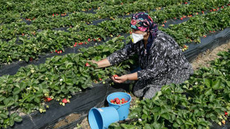Türkiye'den meyve sebze talebi artıyor