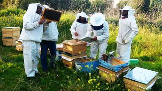 Mersinli arıcılar, bal üretimini artırmayı hedefliyor