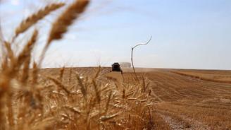 Yazlık ekim yapılabilecek 21 ilde tohumun yüzde 75'i hibe olarak verilecek