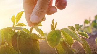KKB, salgının tarım ve gıdaya etkisini mercek altına aldı