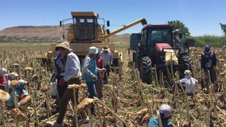 Tadım'dan yerli ay çekirdeği için çiftçiye sürdürülebilir üretim desteği