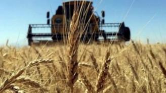 """Çukurova'dan """"buğday üretimi artırılsın"""" talebi"""
