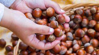 Türkiye'den 8 ayda 210 bin ton fındık ihraç edildi