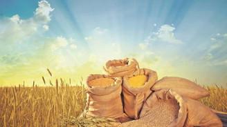 Buğday üretimi bu yıl 20 milyon tonu aşacak