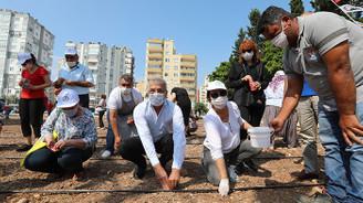 Mezitli'de kent içi tarım dönemi başladı