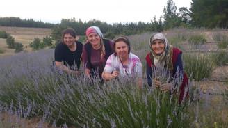 Lavanta bahçeleri Pamukkale'ye renk katacak