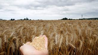 Ucuz krediyi bulan buğday alıyor