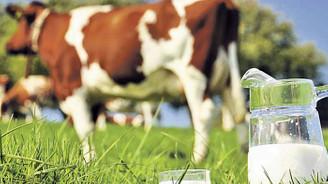 Çin'e süt ürünleri ihracatı olumlu ancak uygulanması 'zor'