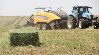 Suriye sınırında yetiştirilen yoncada hasat zamanı