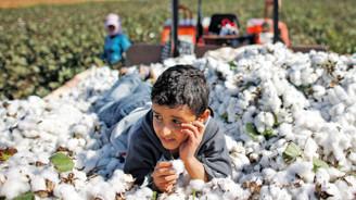 Şanlıurfa'da pamuk ekim alanı yüzde 40 azaldı