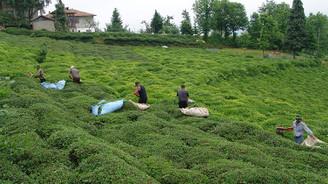 Yaş çay üreticileri 30 Nisan'a kadar Rize'ye gelebilecek