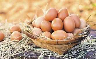 Rana Yumurta, bu yıl yumurta pastörize tesisini devreye aldı