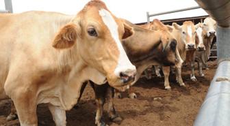 Hayvancılıkta alarm sesleri yükseliyor