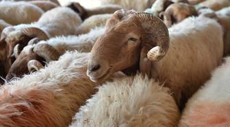 Fakıbaba: 300 koyun projesi yanlış anlaşıldı