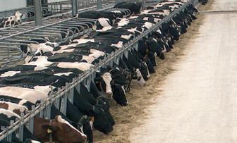 Türkiye'nin en büyük hayvancılık işletmesi konkordato ilan etti