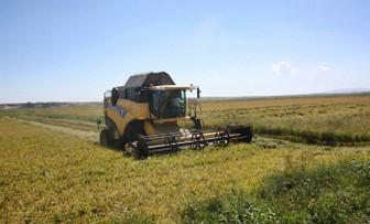 Tarım-ÜFE ekimde arttı