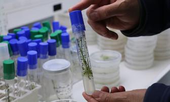 Yüzde 100 yerli, hibrit soğan üretildi