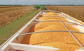 TMO, buğday alımı için ihale açtı