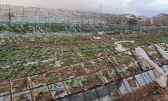 TARSİM, Antalya'da hasar tespit çalışmasına başladı