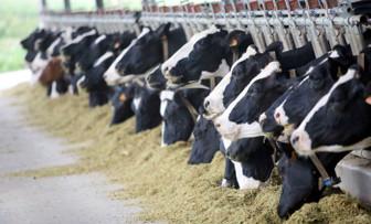 Toplanan inek sütü miktarı eylülde azaldı