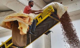 Üretici fındık fiyatının düşmesinden endişe ediyor