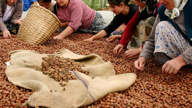 Türkiye 7 ayda 1,2 milyar dolarlık fındık ihraç etti