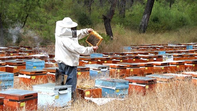 Cizre'de arıcılara arı ve kovan desteği