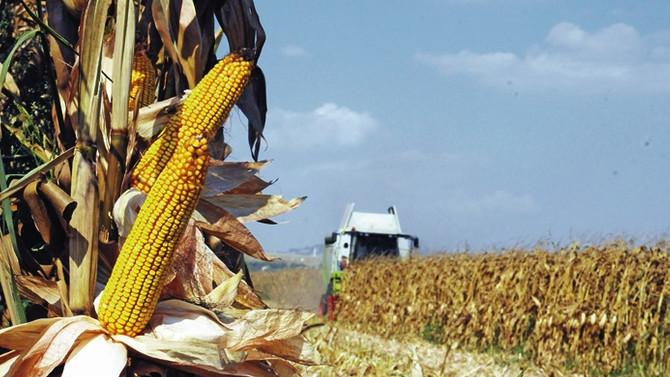'Buğdayda fiyat düştü, mısırda da düşmeden taban fiyat açıklanmalı'