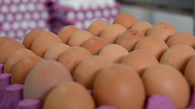 Almanya, Hollanda'dan 5 milyar adet yumurta aldı