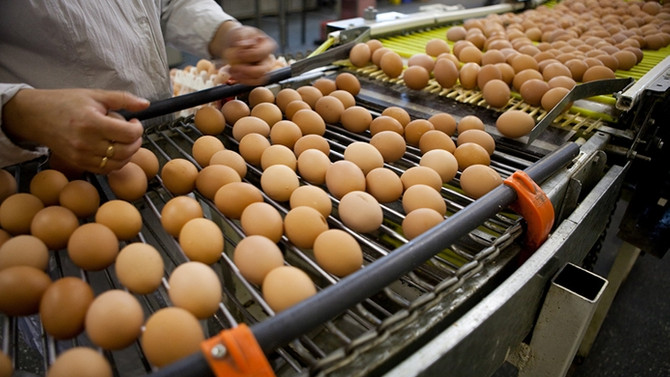 İngiltere, 700 bin 'zehirli' yumurta ithal etti