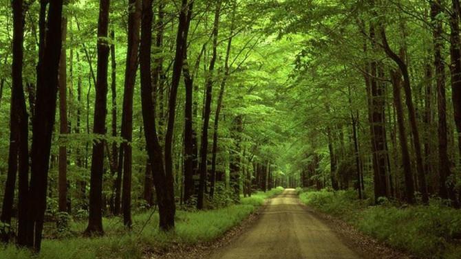 'Hammaddede süreklilik için özel orman işletmeciliği getirilmeli'