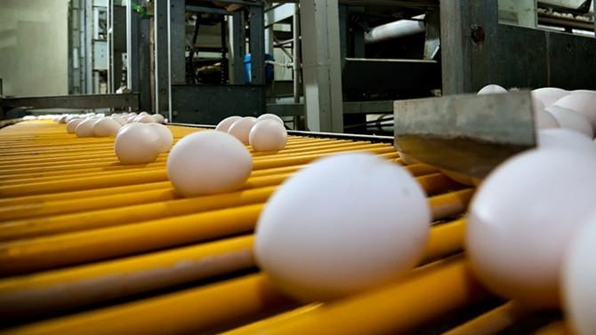 Yumurta üretimi yüzde 2,9 arttı