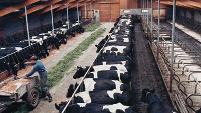 Türkiye'de hayvansal üretim geriliyor