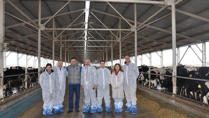 Sıkıntıdaki hayvancılığa Yeni Zelanda'dan işbirliği teklifi