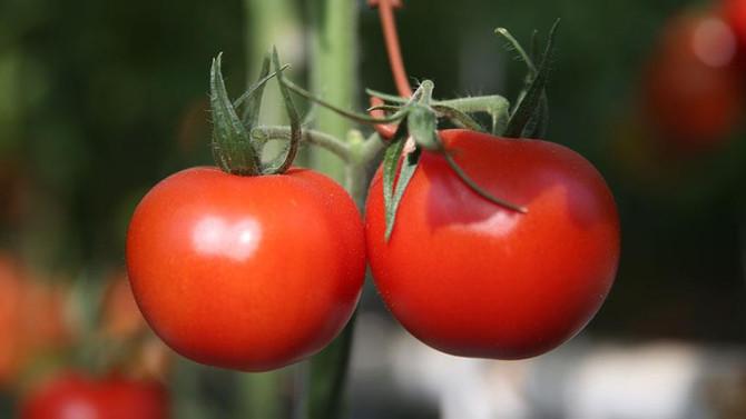 İstanbullu kasımda domatesi yüzde 36 zamlı aldı